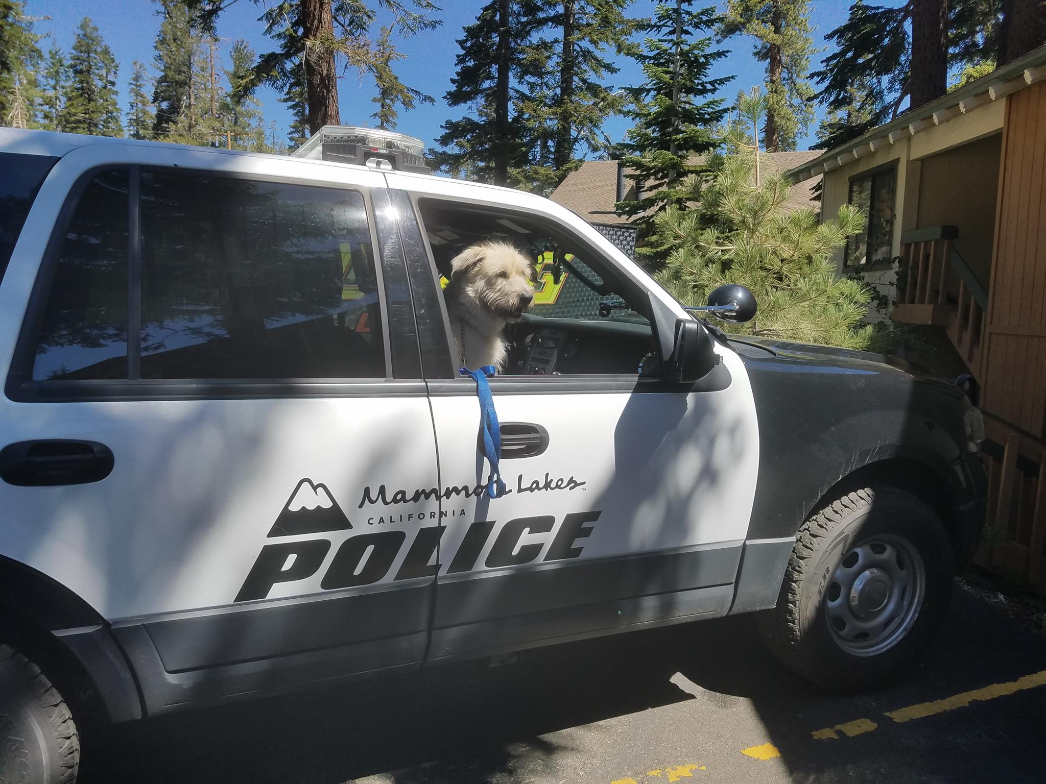Dog in MLPD Car